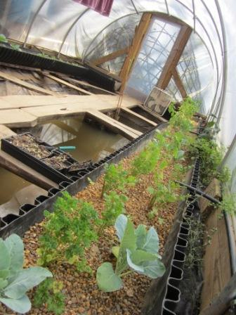 Inside Ashevillage Aquaponics